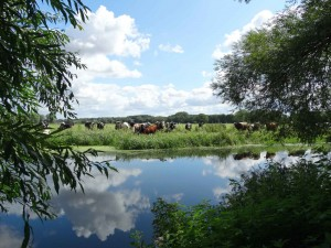 The River Waveney at Earsham
