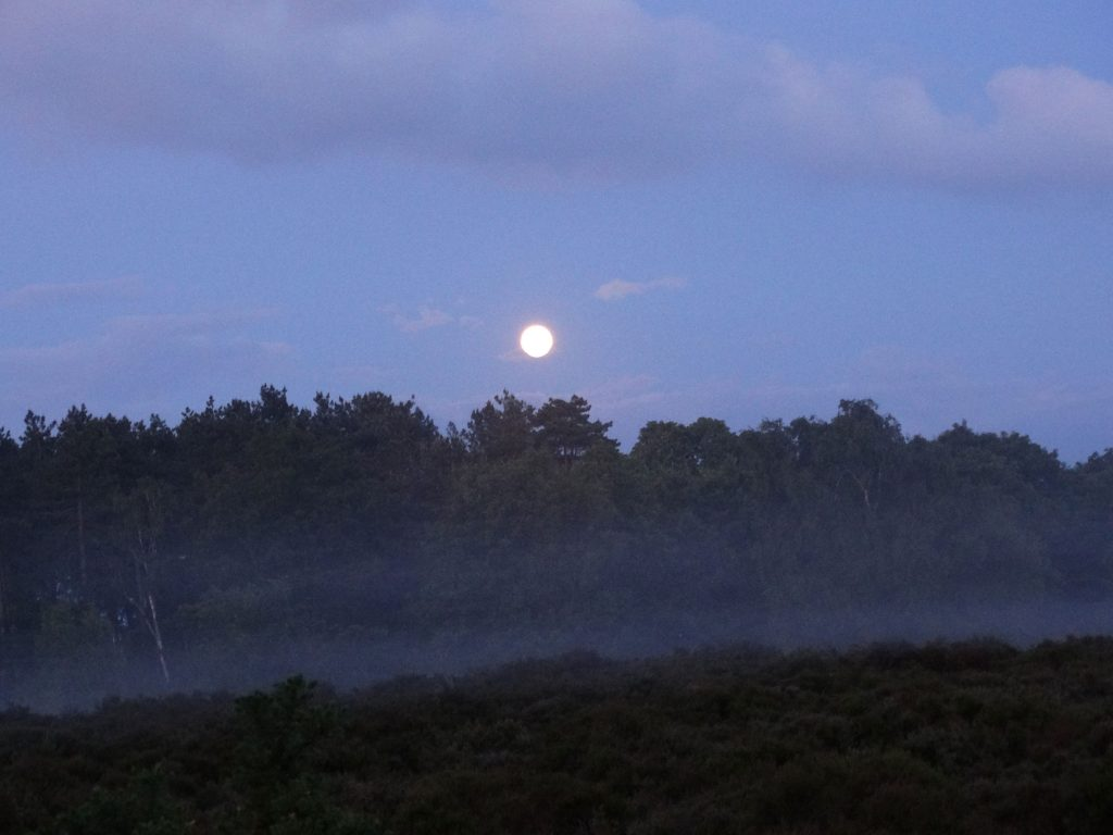 Full moon rising over the heath. My photo.